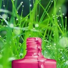Vernis dans l'herbe et la rosée