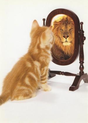 Chat qui s'imagine lion devant un miroir